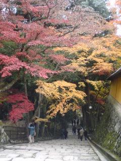 11月29日(木)湖東の紅葉を味わう